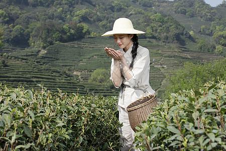 茶园里的采茶美女手捧新茶图片