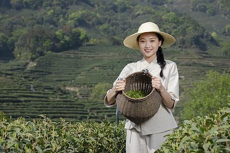 茶园里的采茶美女图片