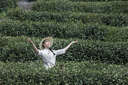 茶园里的采茶美女张开双手图片