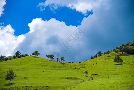 云南昆明寻甸高山草甸牧场自然风光图片