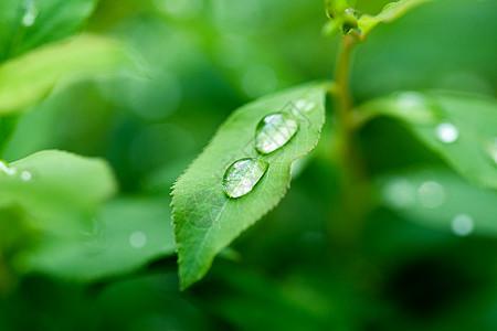 夏至海报水珠在绿色叶子上图片