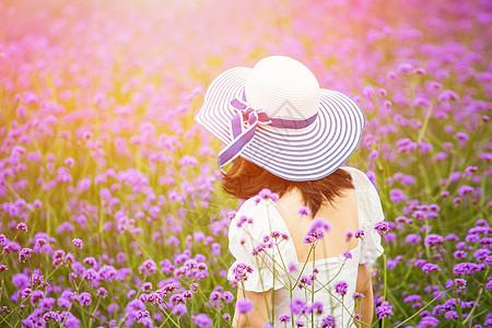 漫步薰衣草园的美女背影图片