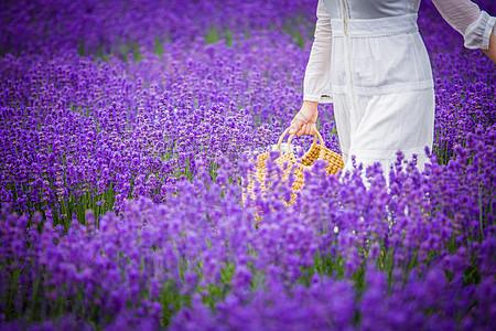 漫步薰衣草园图片