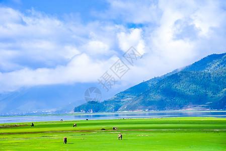 香格里拉纳帕海风景区图片