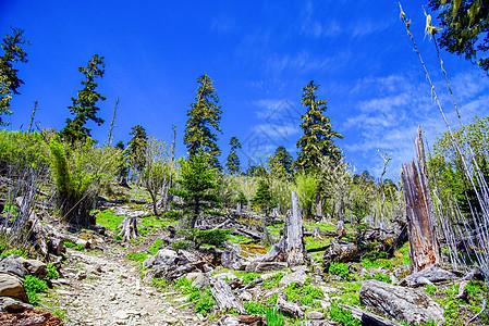 香格里拉原始森林图片