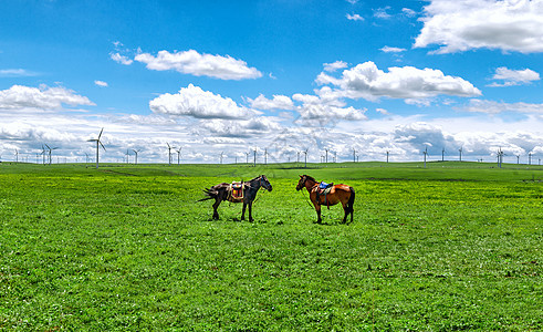 内蒙古辉腾锡勒草原牧场牧马图片