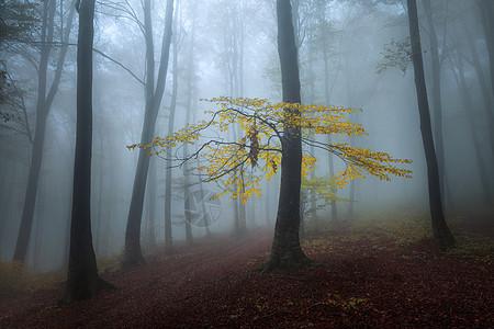 神秘梦幻的森林图片
