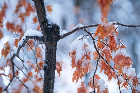 吉林亚龙湾景区冬天树挂风景图片