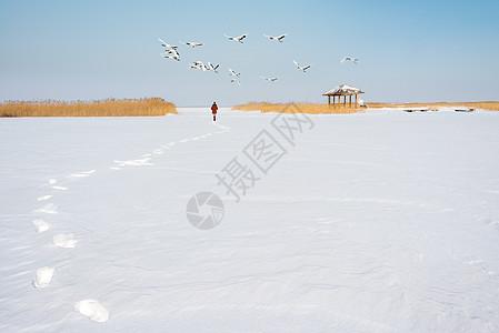扎龙自然保护区丹顶鹤图片