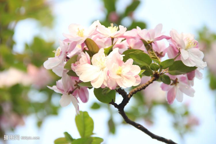 春天自然花卉v自然相扑梨花木兰桃花花草瘦下来图片
