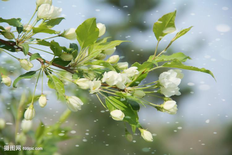 春天成员梨花v成员花卉自然木兰花草中国电子竞技桃花有哪些图片