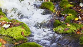 小溪河流河水溪流