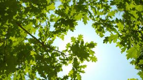 仰视拍摄天空树叶凉爽通透的夏日