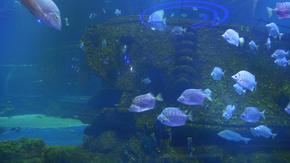 海洋馆实拍热带鱼4K素材