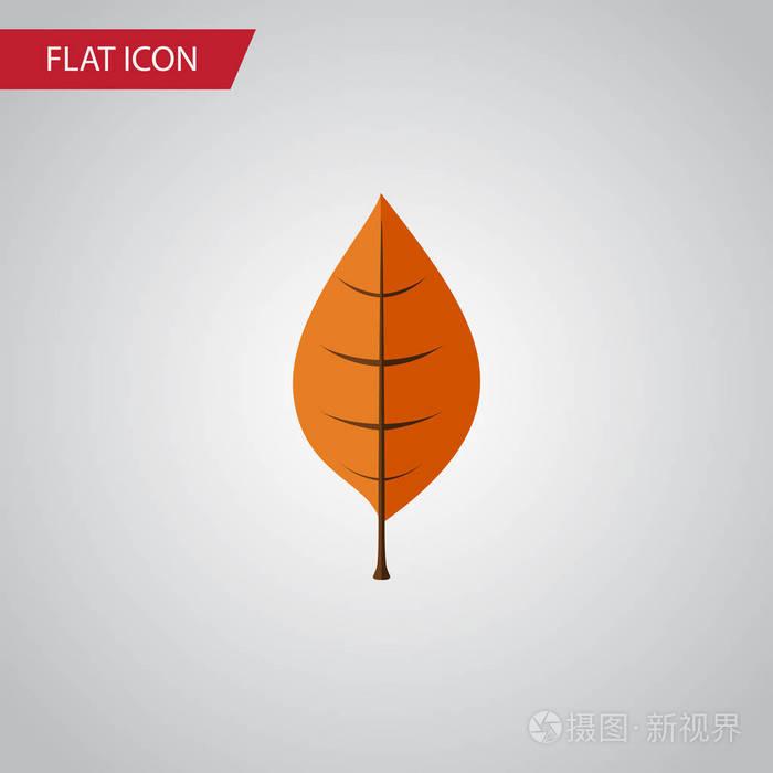 孤立的山核桃树叶矢量。平面图标部队用于元素装修设计宗旨图片