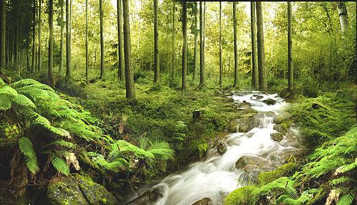 「溪水」的圖片搜尋結果