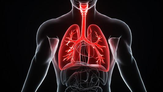 肺图片_肺素材_肺高清图片_摄图网图片下载