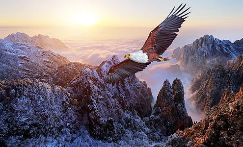 暂无图片logo_霸气的老鹰图片素材-正版创意图片500522743-摄图网