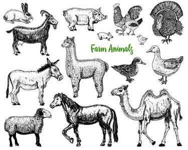 猪交配图_驴图片-驴素材-驴插画-摄图新视界